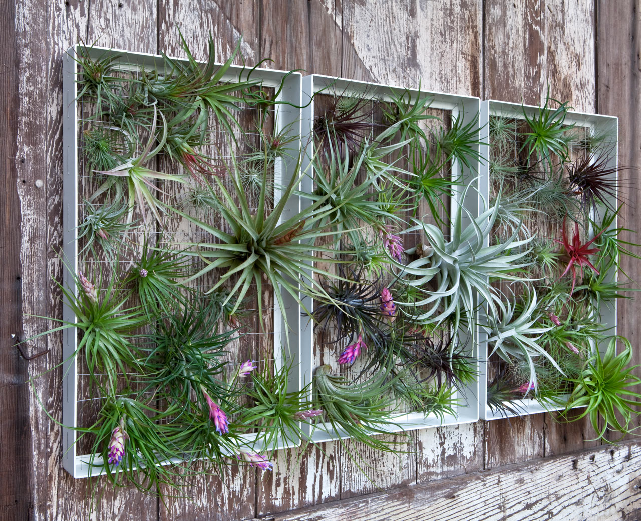 garden wall art living wall art vertical garden frames by airplantman ... SBXRIQB