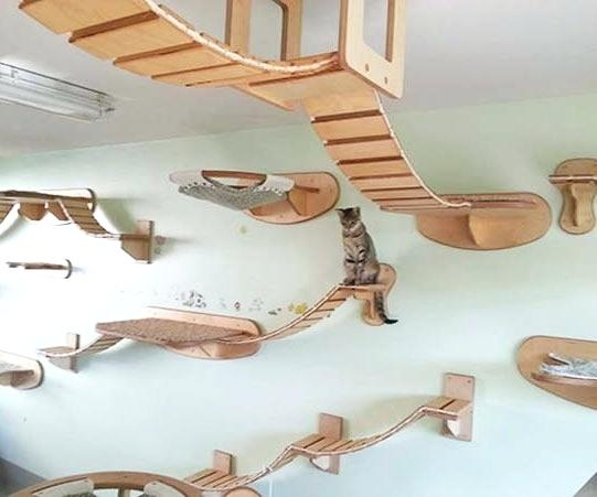 Contemporary Cat Wall Shelf Mounted Stair Ed Ex Steval Decoration Diy Ikea  Uk Idea Amazon Australium