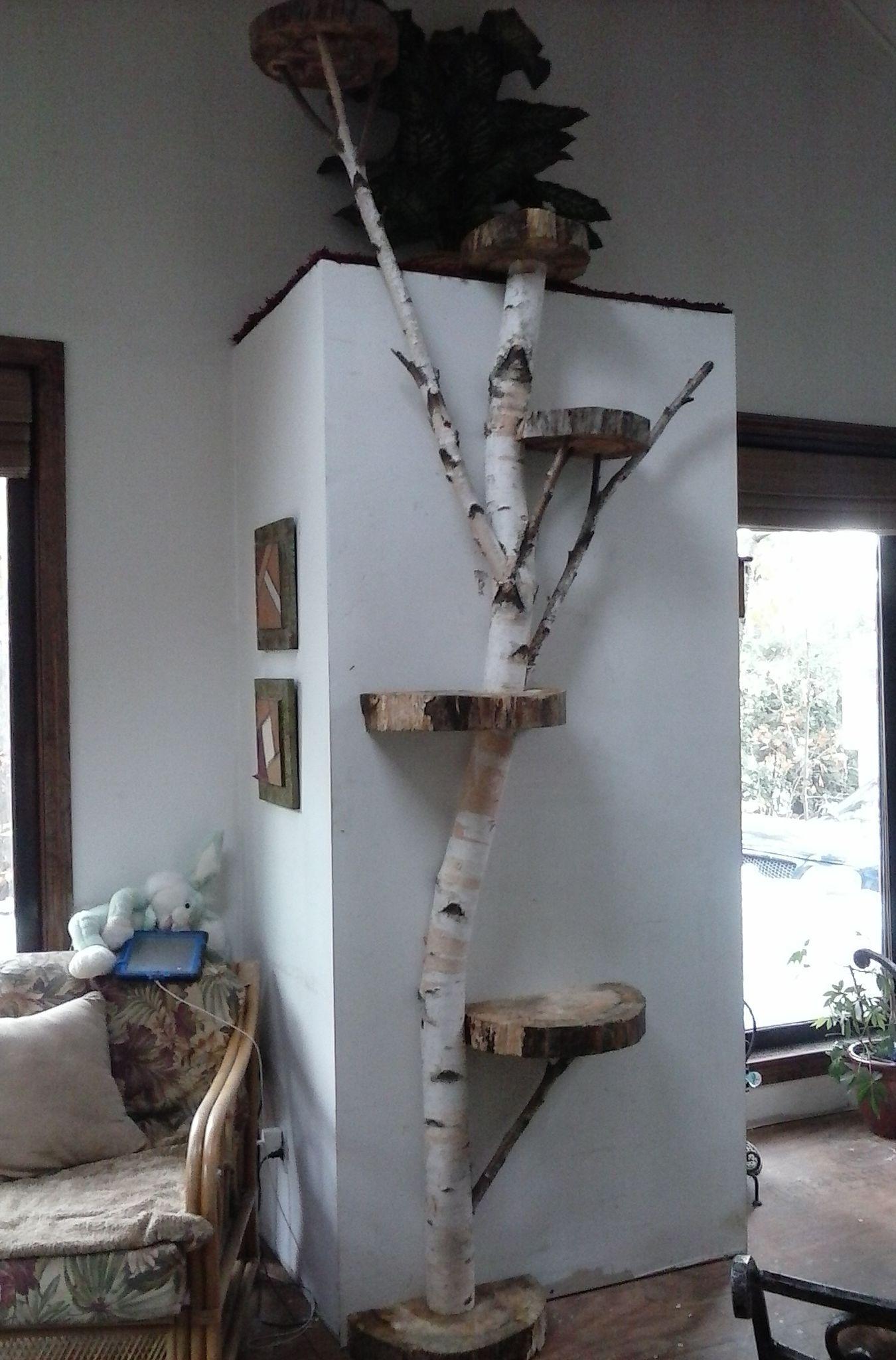 Cat Wall Shelves, Shelves For Cats, White Shelves, Diy Cat Tree, Cool