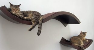 Amazing Wall Mounted Cat Bed Ideas Best Home Decorations Magazine    Cats  do as they do   Pinterest   Cat wall shelves, Cats and Cat shelves