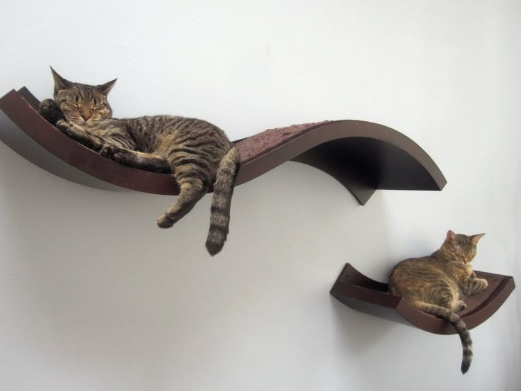 What is the purpose of decorative cat   wall shelves and how to build them?